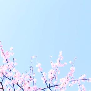 """LOOP POOL """"April""""[PV]"""